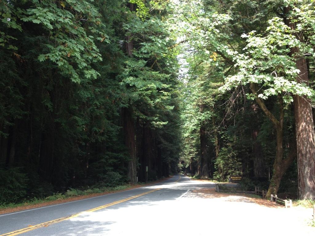 La suggestiva Avenue of the Giants.