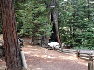 Il Shrine Drive Thru Tree