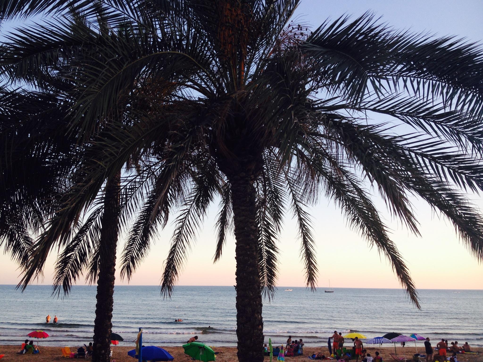 Le palme che costeggiano il lungomare di Marina di Ragusa.